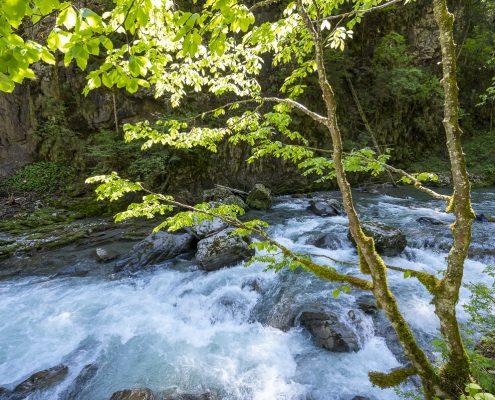 Gebirgsfluss Breitach