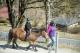 Ponyhof Scheidegg