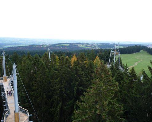 Aussicht-Bäume